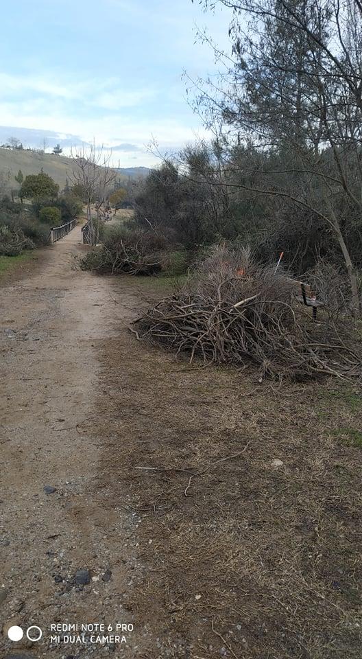 Κοπή ψηλών δέντρων και κλαδέματα στο Φράγμα Θέρμης